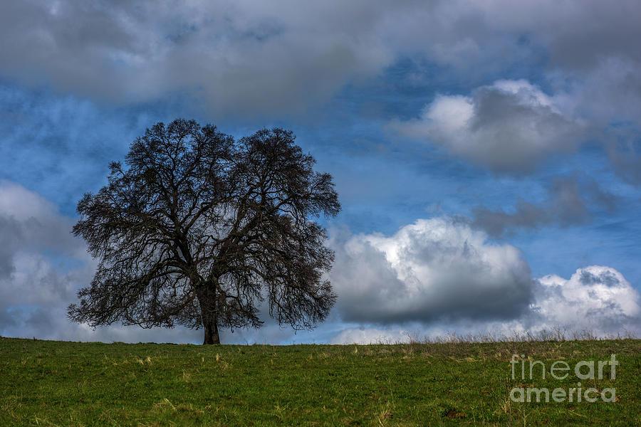Single Tree on a Hillside by Daniel Ryan