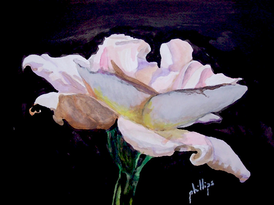 White Rose Painting - Single White Rose by Jim Phillips