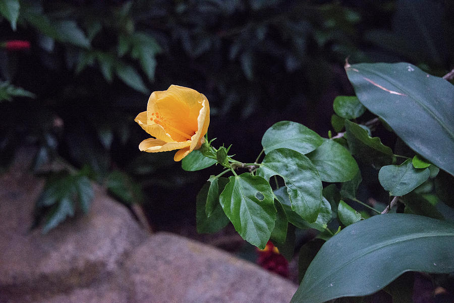 single yellow bloom by Michael Bessler