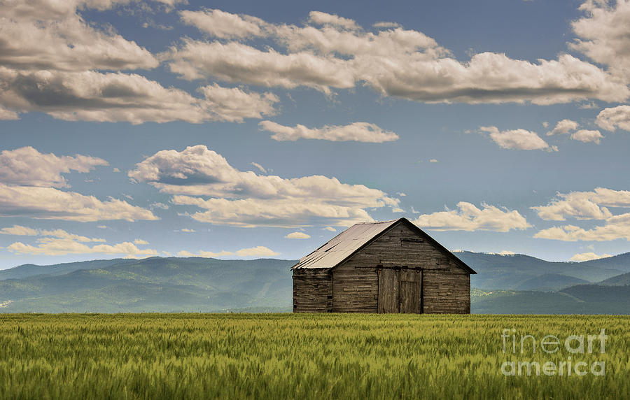 Barn Photograph - Singled Out by Sandra Bronstein