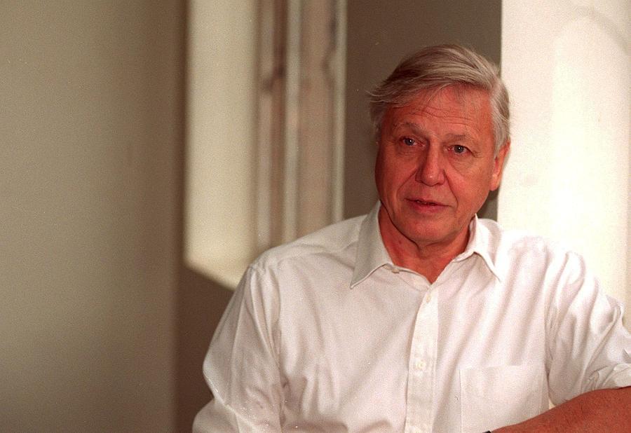 Photographer Photograph - Sir David Attenborough by Jez C Self