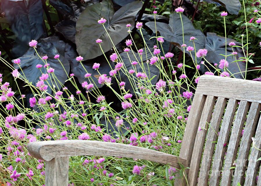 Bench Photograph - Sitting Amongst A Wildflower Garden by Sherry Hallemeier