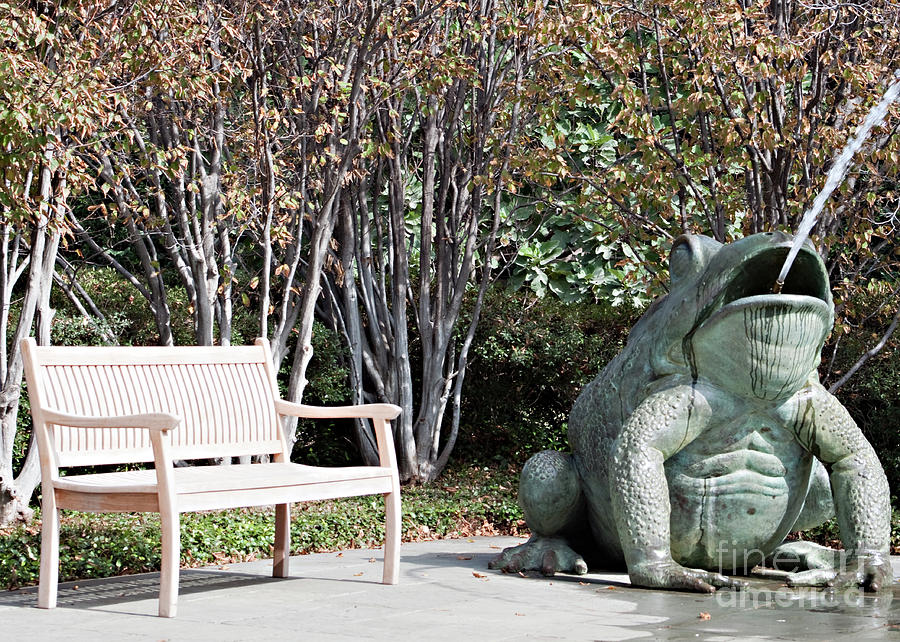 Bench Photograph - Sitting And Watching The Frog by Sherry Hallemeier