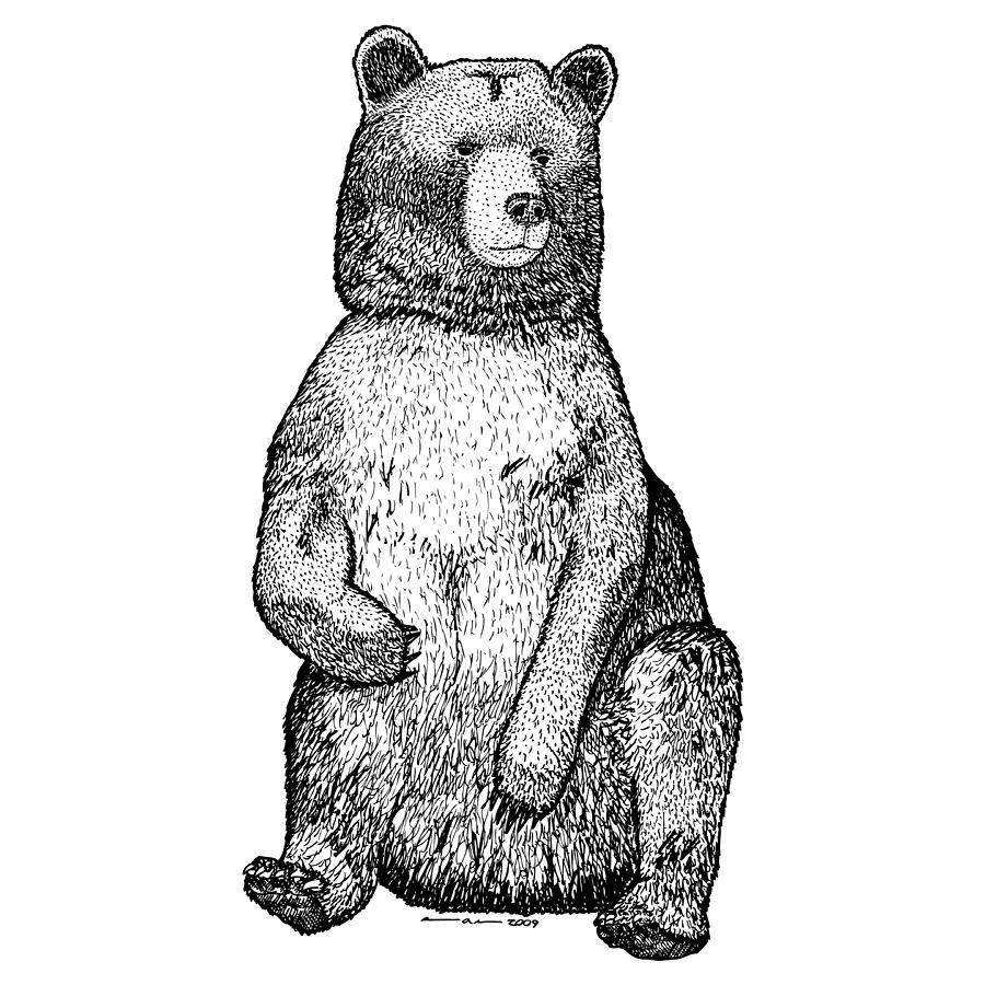 Drawing Drawing - Sitting Bear by Karl Addison