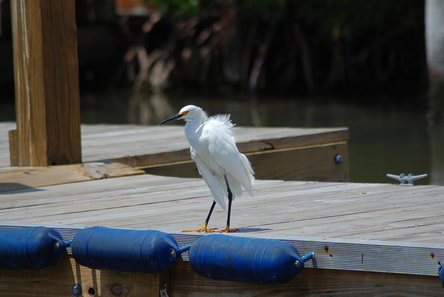Wildlife Photograph - Sitting On The Dock Of The Bay by Clay Peters Photography