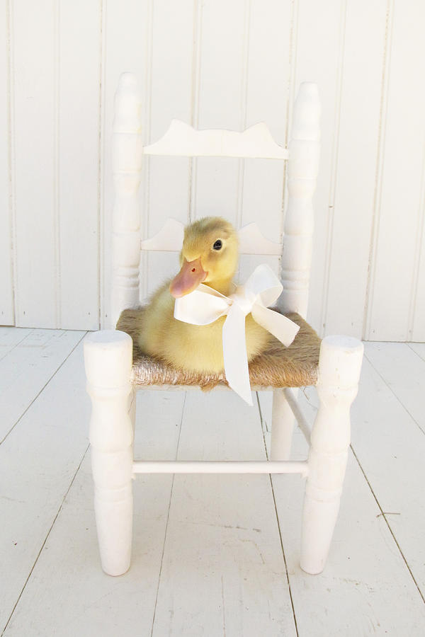 Duckling Photograph - Sitting Pretty by Amy Tyler