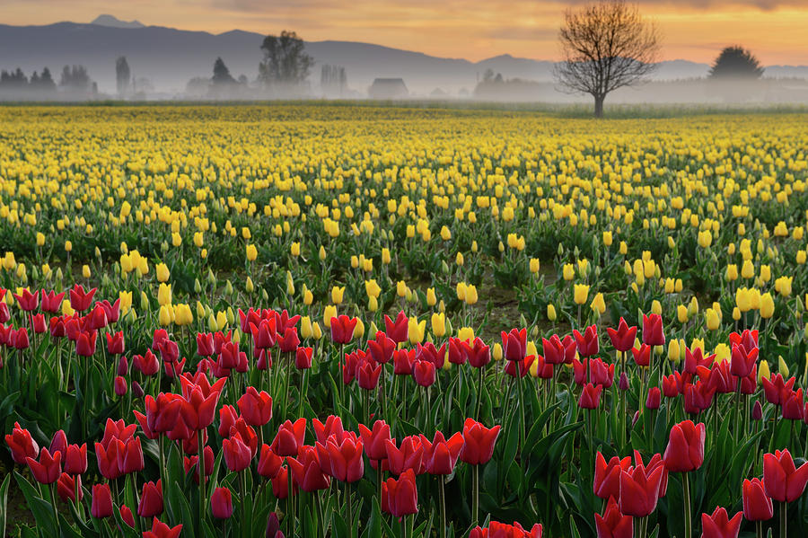 Skagit Valley Misty Morning by Dan Mihai