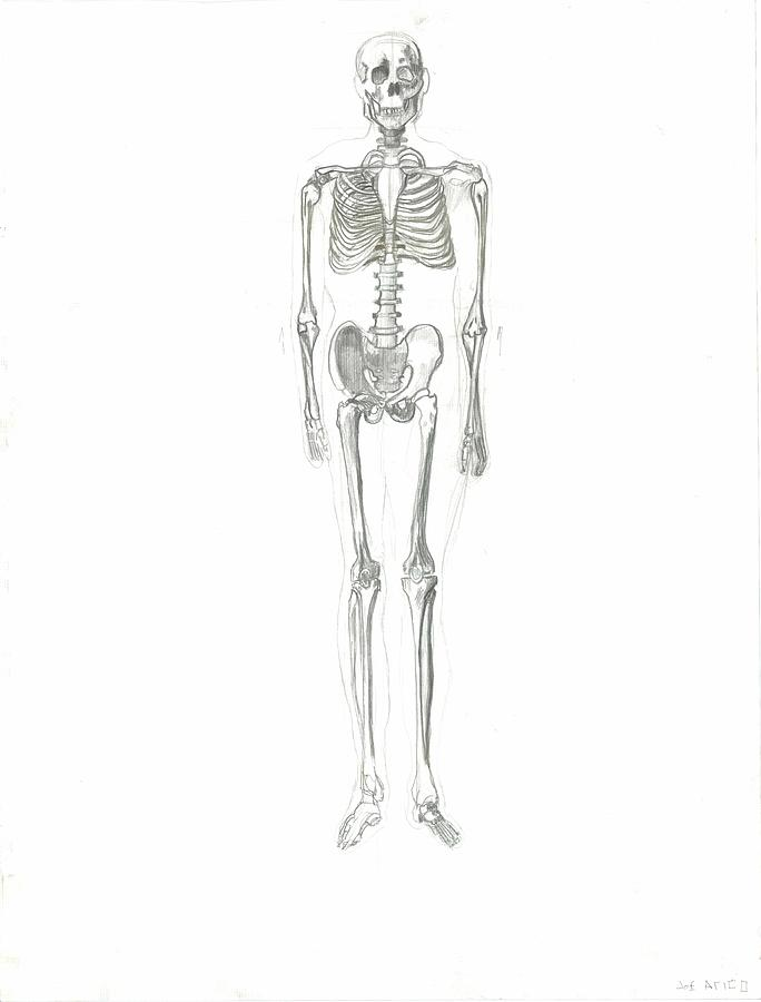 Skeleton Drawing by Joseph  Arico