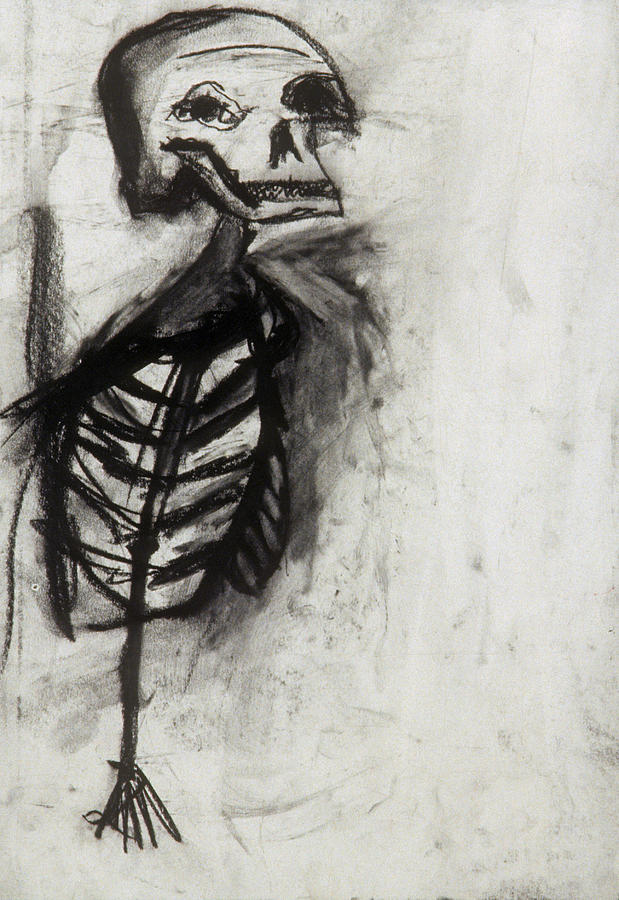 Charcoal Drawing - Skeleton Study by Jamie Wooten