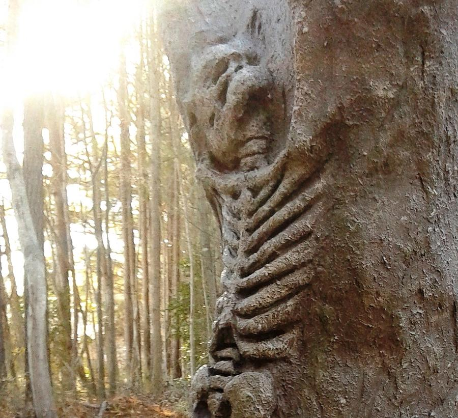 Skeleton Photograph - Skeleton Tree by Emily Page