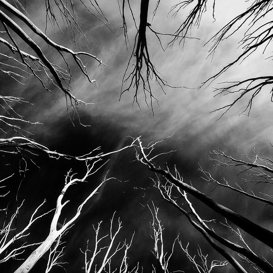 Skeleton trees  by Mihai Florea