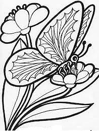 Butterfly Drawing - Sketch Painting by Supriya Singh