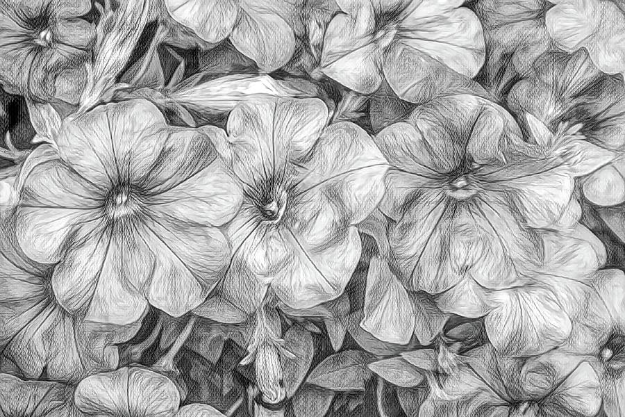 Sketched Petunias by Renette Coachman