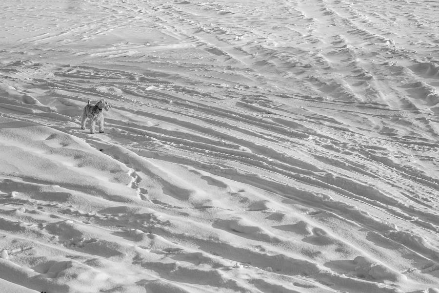 Rescue Photograph - Ski Dog by Gunther Schabestiel