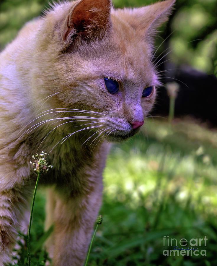 Animal Photograph - Skippy Feral Cat Portrait 0369b by Ricardos Creations