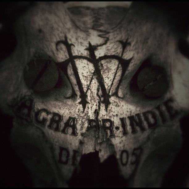 Skull Photograph - Skull by Dave Edens