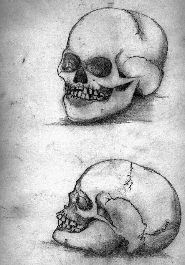 Skull Drawing - Skull Drawing by Alban Dizdari