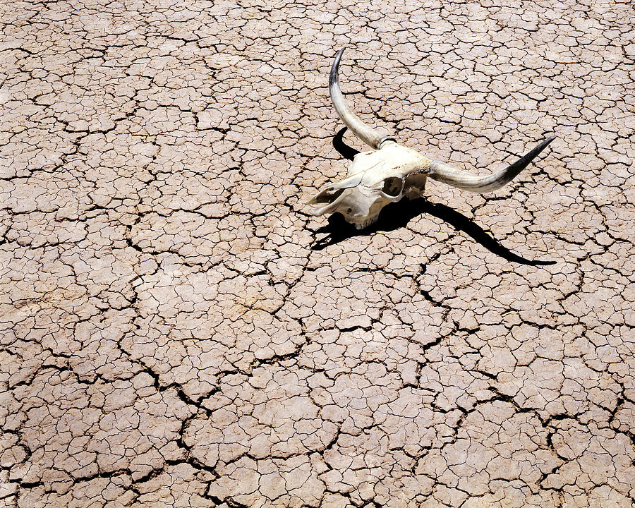Skull In Desert 2 Photograph By Kelley King