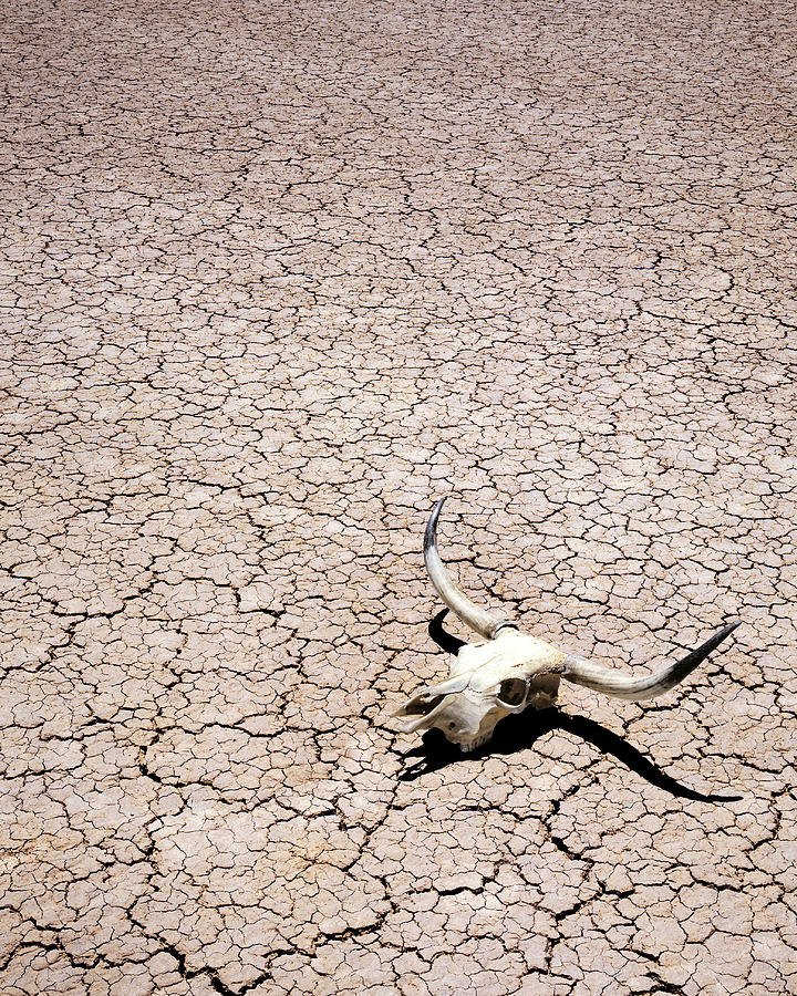 Skull In Desert Photograph