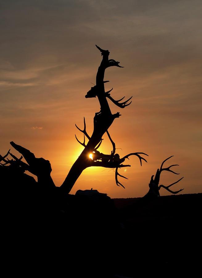 Sunrise Photograph - Skull Tree by Julia McHugh