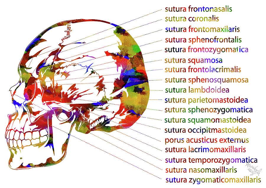 Skull With Sutura Mixed Media by Ann Leech