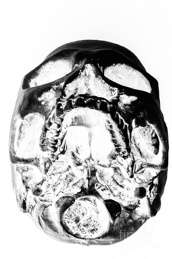 Anatomy Photograph - Skulls And Dental Records by Jorgo Photography - Wall Art Gallery