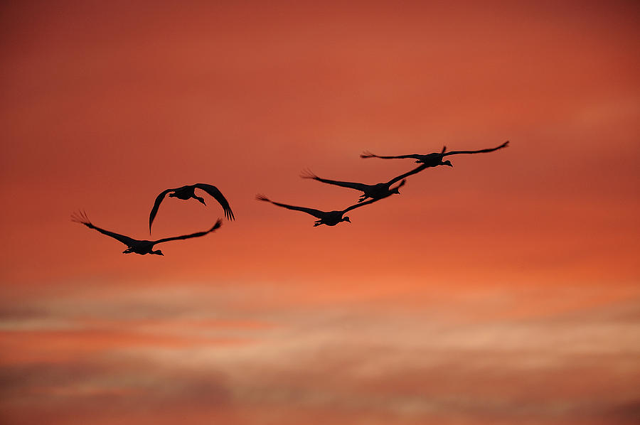 Bird Photograph - Sky On Fire by Philippe Francis