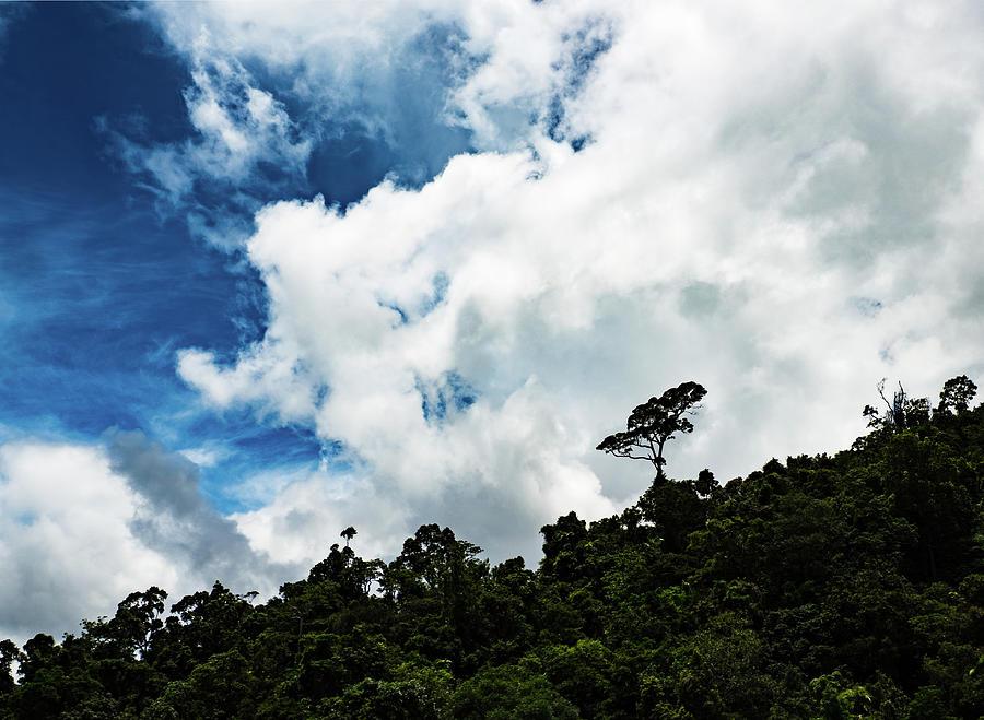Lone Tree by Walt Sterneman