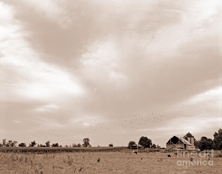 Farm Photograph - Sky View by Jacqueline Milner