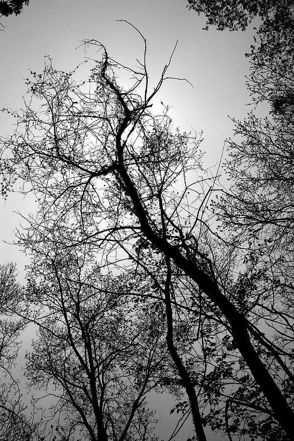 Skyward by Randy Oberg