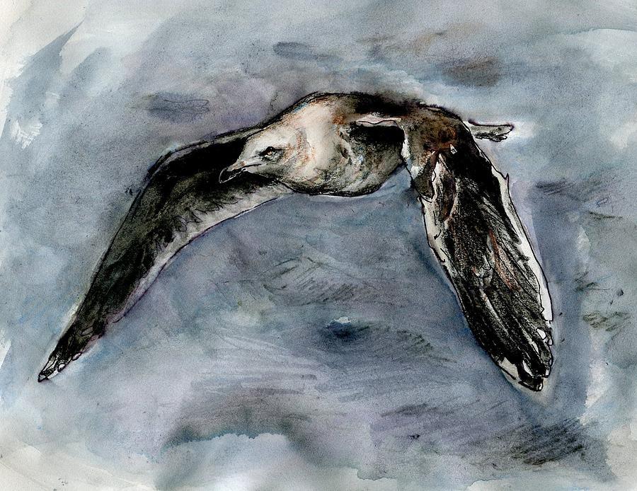 Slaty-backed Gull by Abby McBride