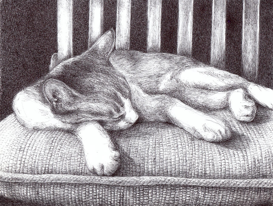 Cat Drawing - Sleeping Cat by Anne Thouthip