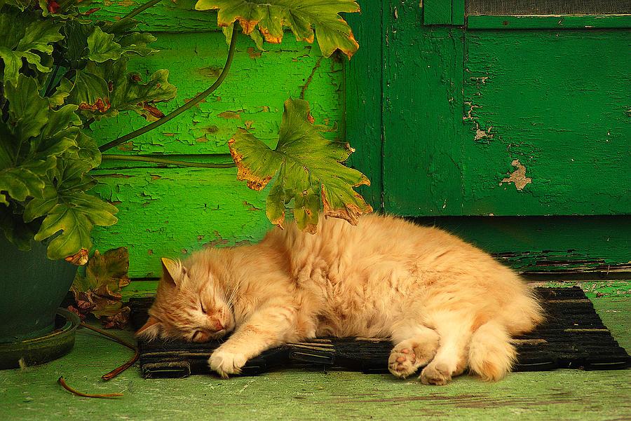 Sleeping Cat by Harry Spitz