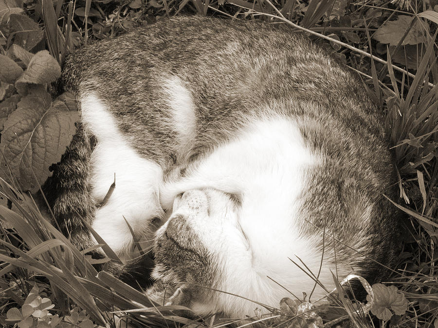 Pets Photograph - Sleeping by Daniel Csoka