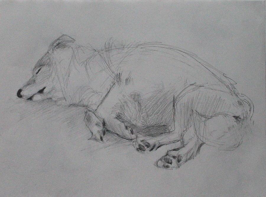 Dog Drawing - Sleeping Dog 2 by Jackie Hoats Shields