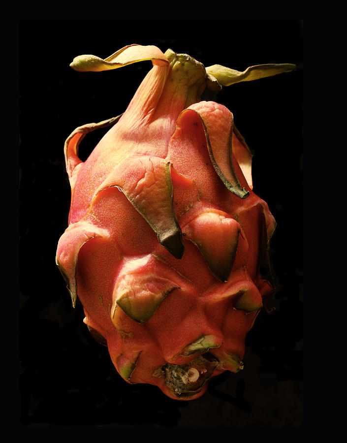 Dragon Fruit Photograph - Sleeping  Dragon by Terence Davis