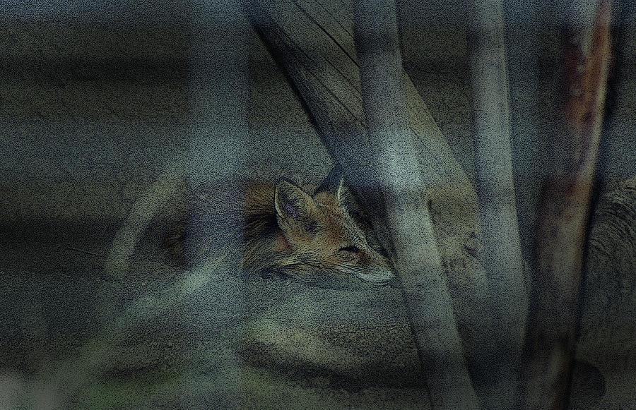 Sleeping Fox by Maria Reverberi