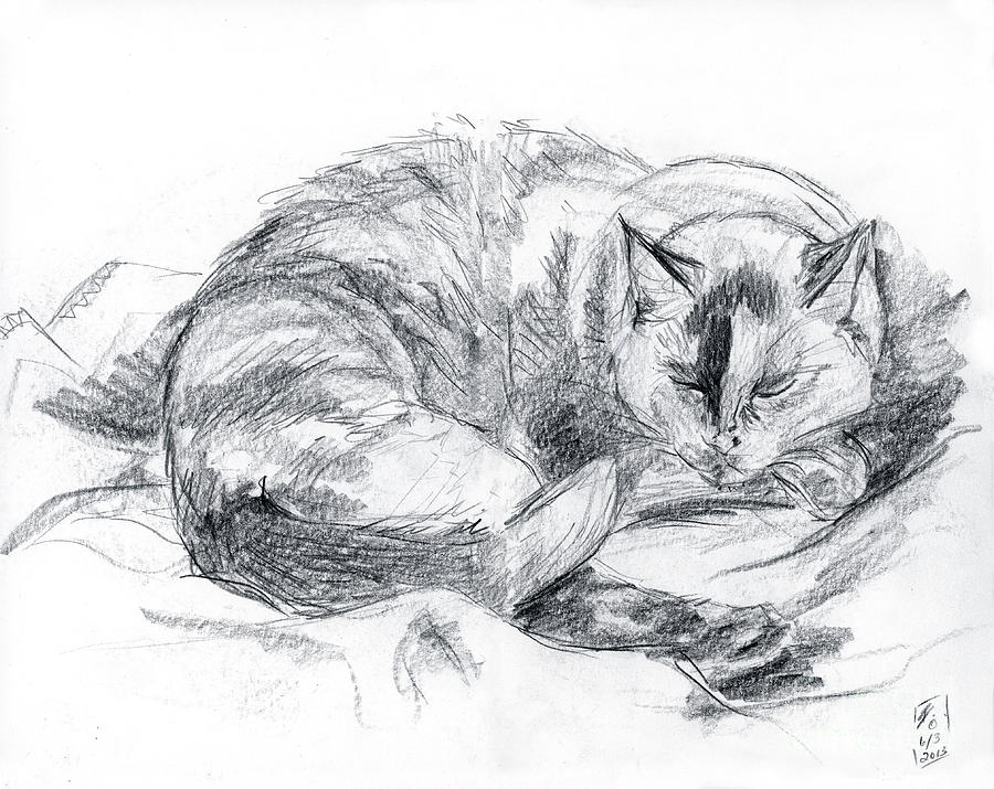 Cat Drawing - Sleeping Jago by Brandy Woods