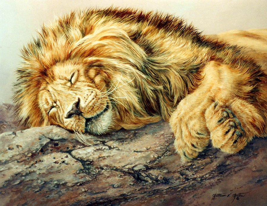 Lion Portrait Painting - Sleeping Lion by Kathleen V  Butts
