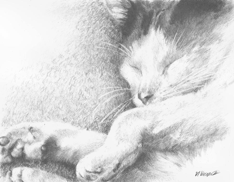 Cat Drawing - Sleeping Sadie by Meagan  Visser