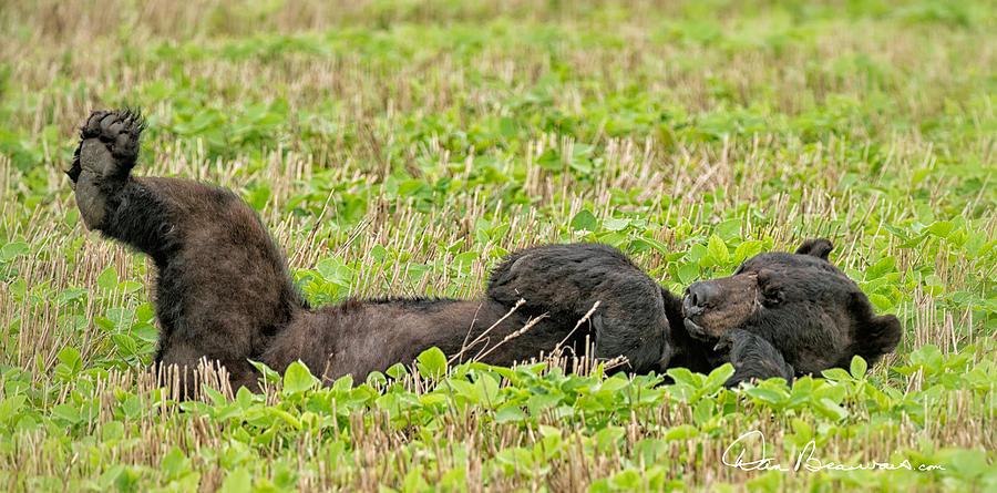 Sleepy Bear 7431 Photograph