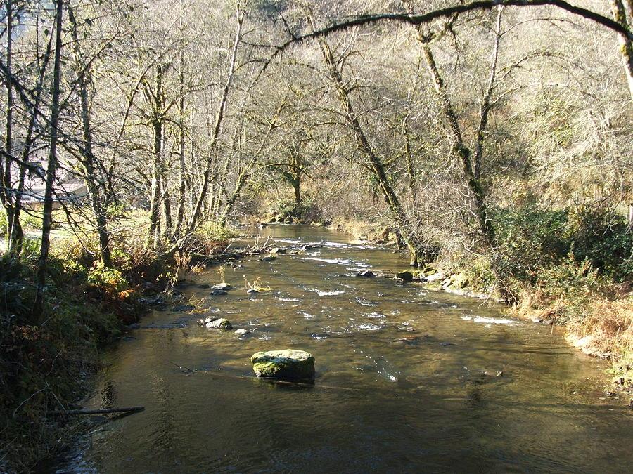 River Photograph - Sleepy Creek by Shari Chavira