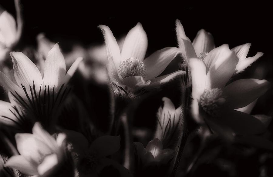 Sleepy Flowers Photograph