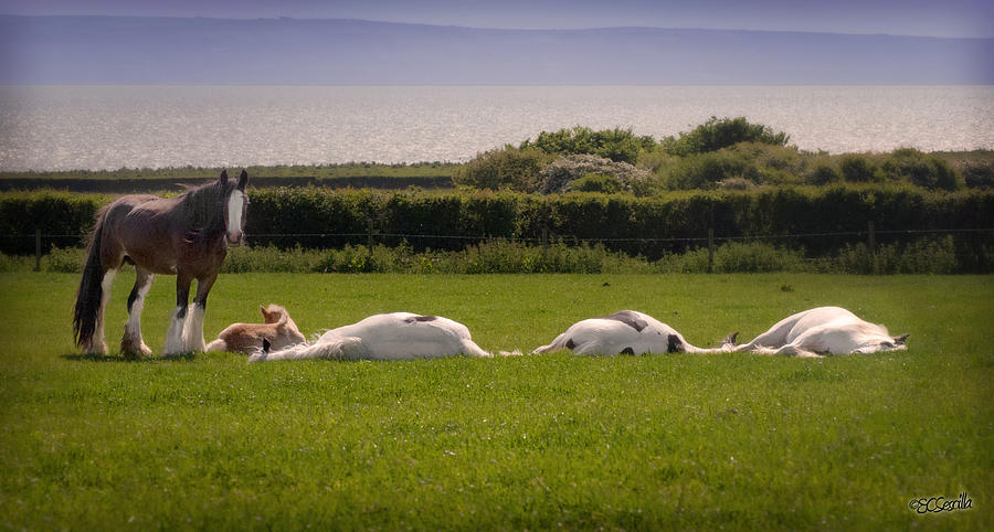 Gypsy Vanner Photograph - Sleepy Gypsy Afternoon By The Water by Elizabeth Sescilla