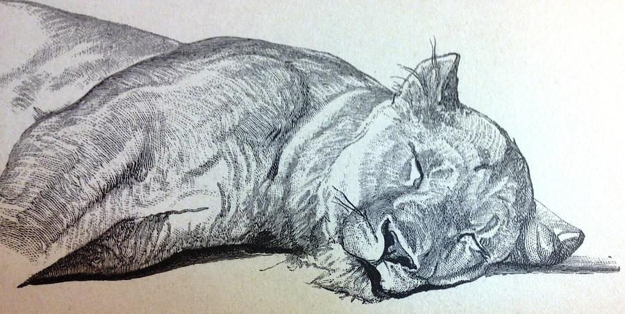 Photo Drawing - Slepping Lion by Lord Frederick Lyle Morris - Disabled Veteran