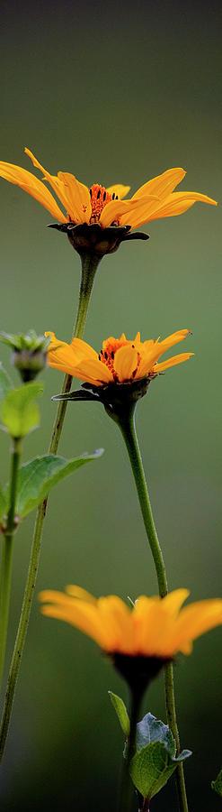 Prairie Photograph - Slice of Prairie Flowers - Panel by Mark Braun