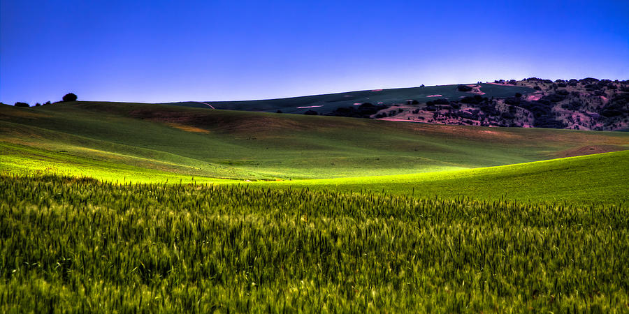 Bearded Wheat Photograph - Sliver Of Sunlight On The Palouse Hills by David Patterson