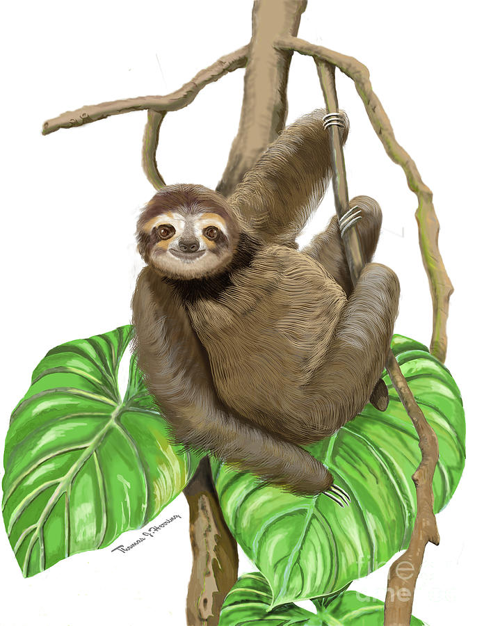 Hanging Three Toe Sloth  by Thomas J Herring