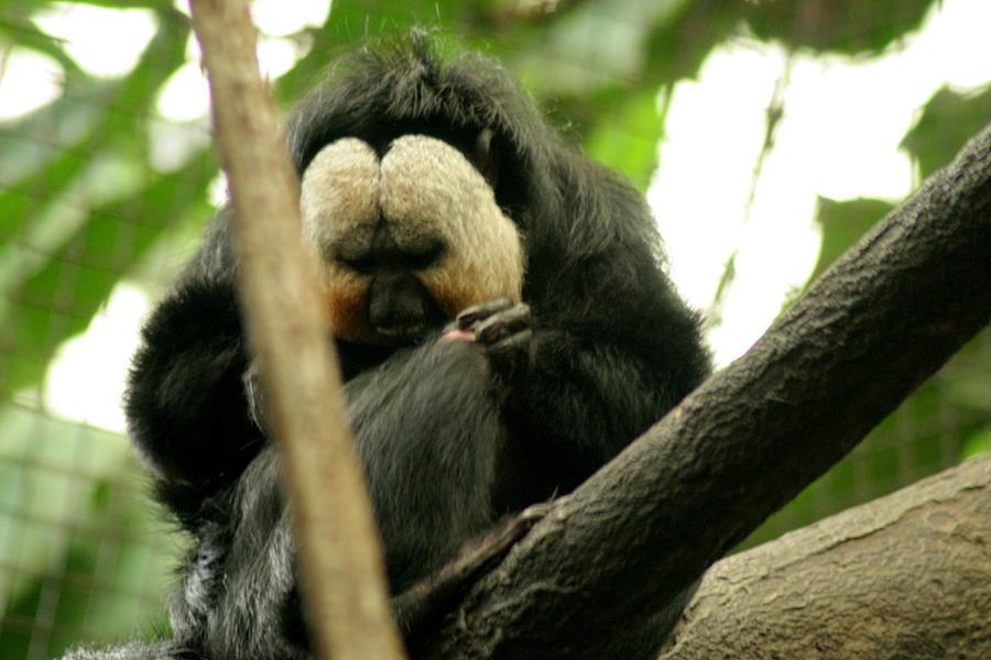 Sloth Photograph - Sloth by ShadowWalker RavenEyes Dibler