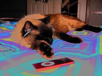 Slumber Kitty Photograph by Danielle McLemore